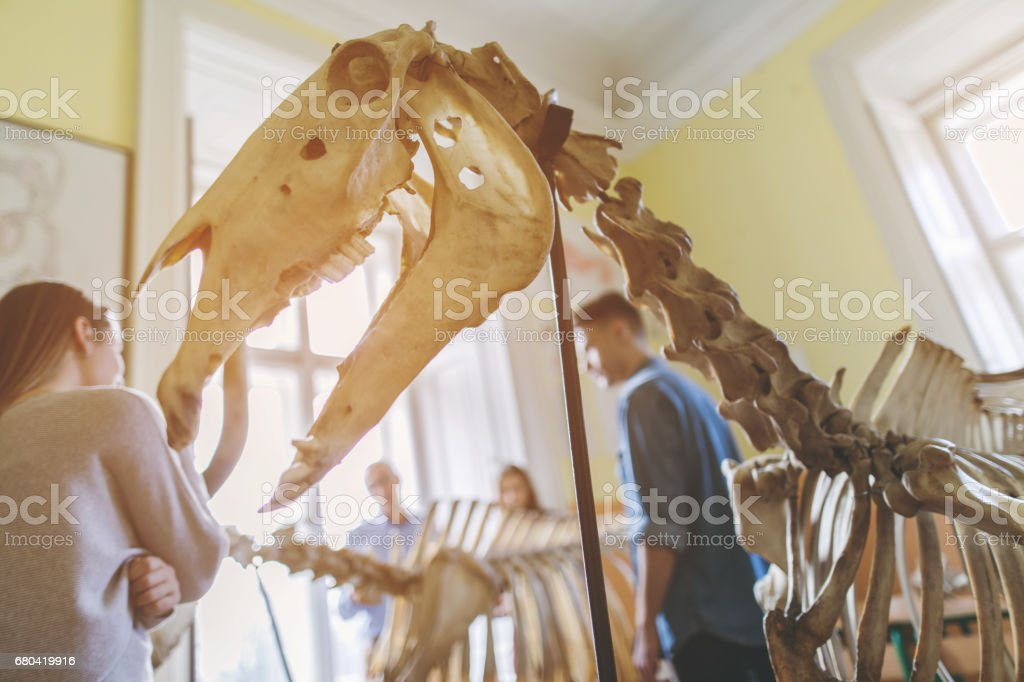 Animal skeleton in the classroom with people in background. stock photo