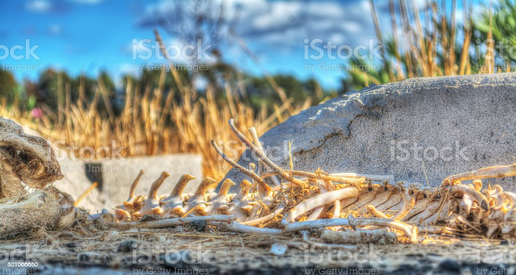 animal skeleton in the countryside stock photo
