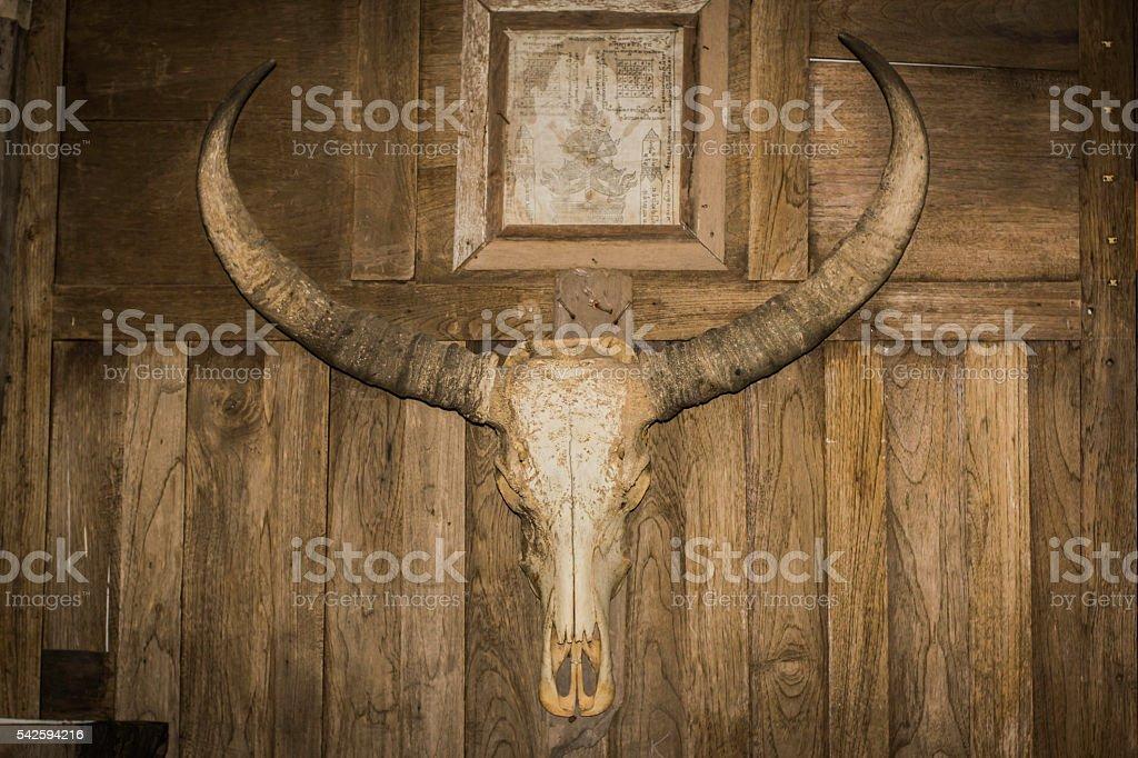 animal skulls stock photo
