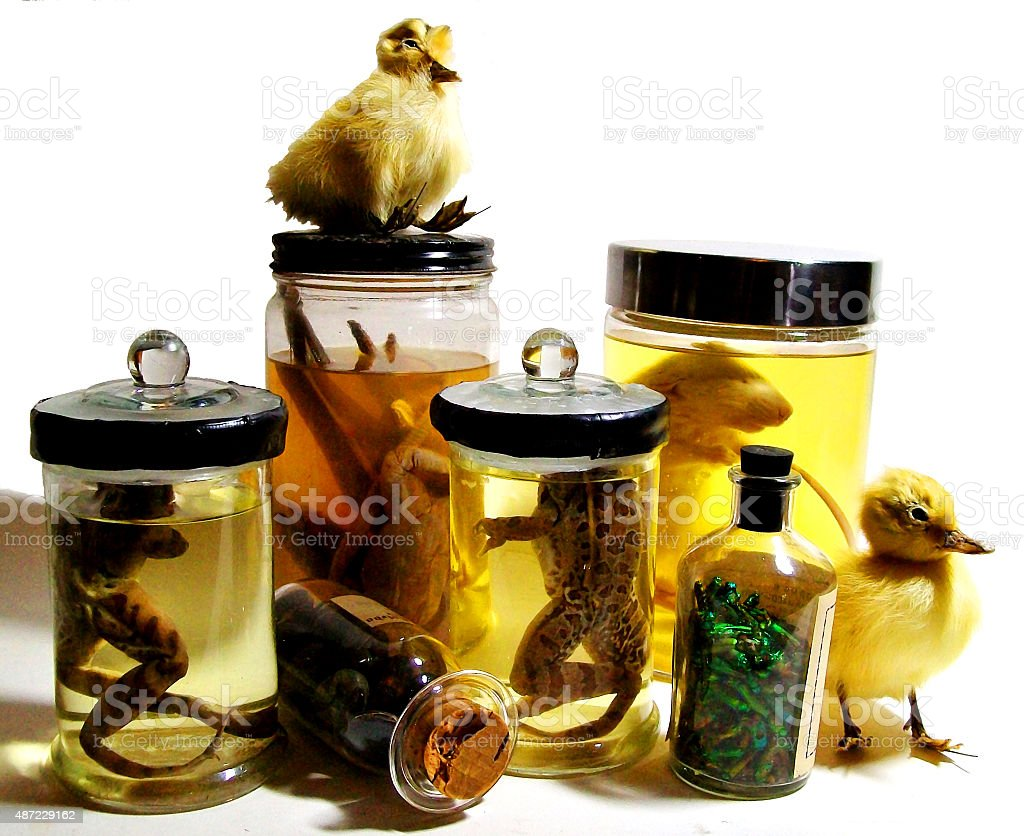 Animal Specimens in jars stock photo
