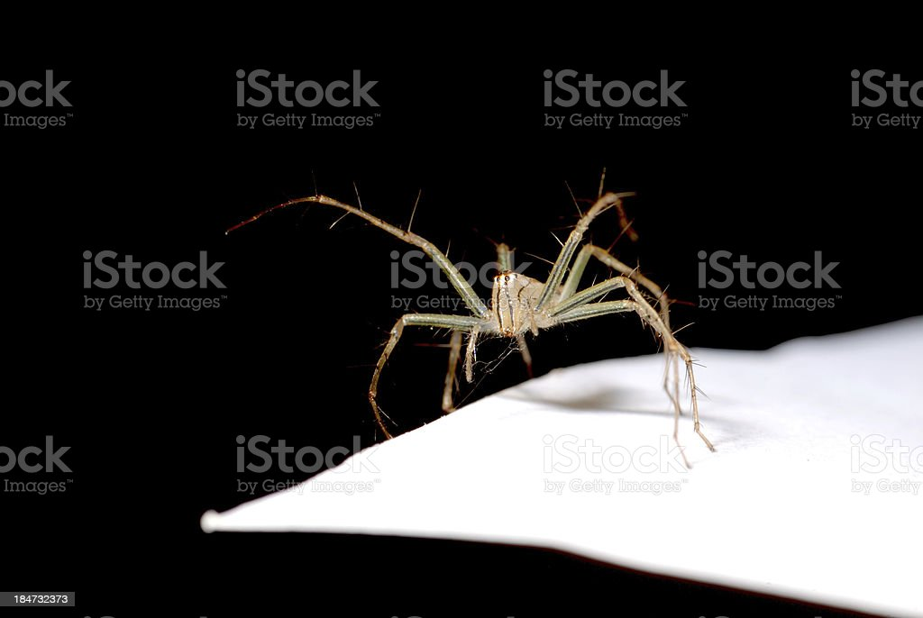 animal spider macro royalty-free stock photo