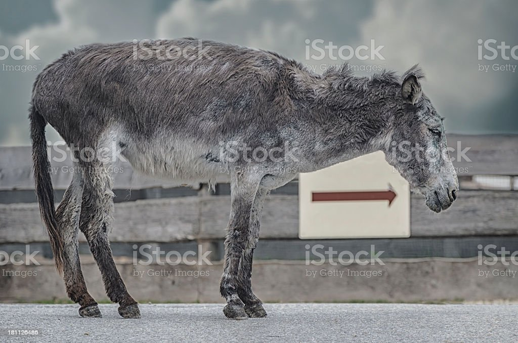 Animal suffering stock photo