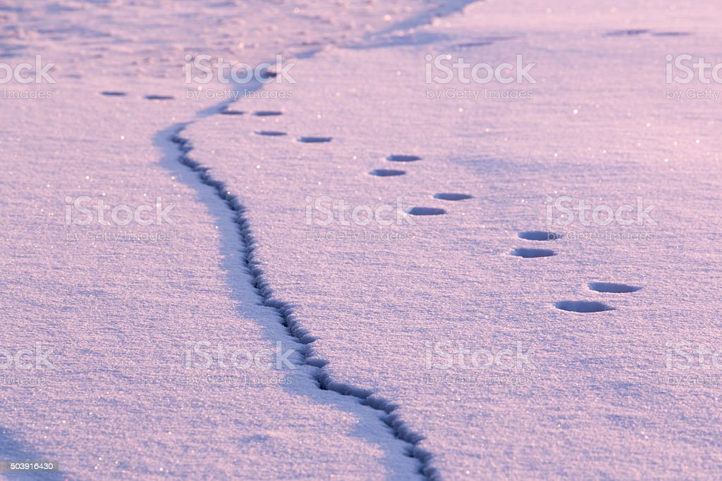 Animal track and cracked ice at a frozen lake stock photo