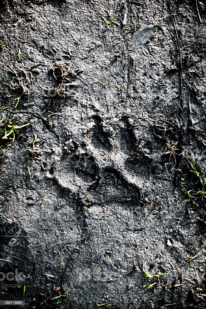 Animal track stock photo