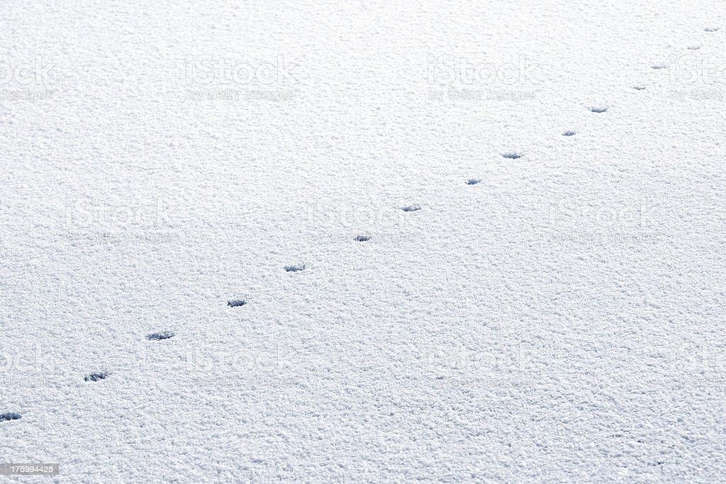 animal tracks in snow royalty-free stock photo