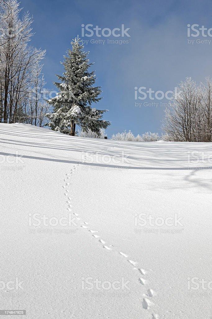 Animal Tracks in Snow Winter Alps Slovenia stock photo