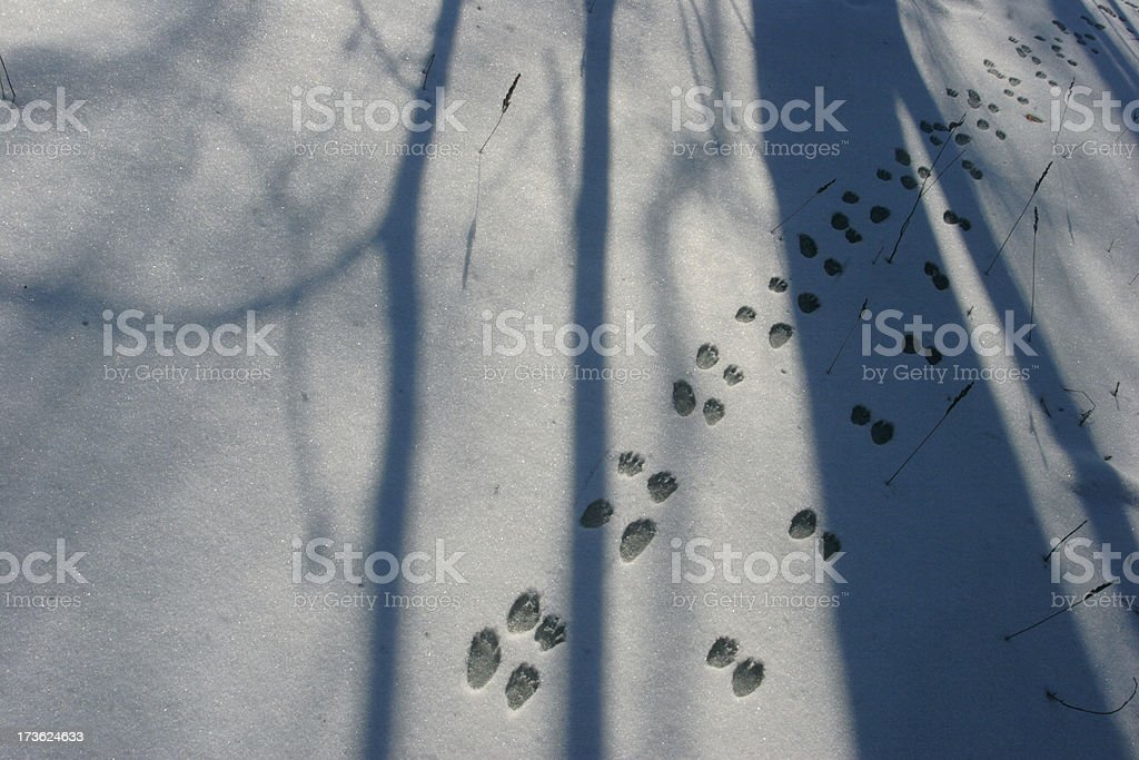 Animal Tracks in the Snow stock photo