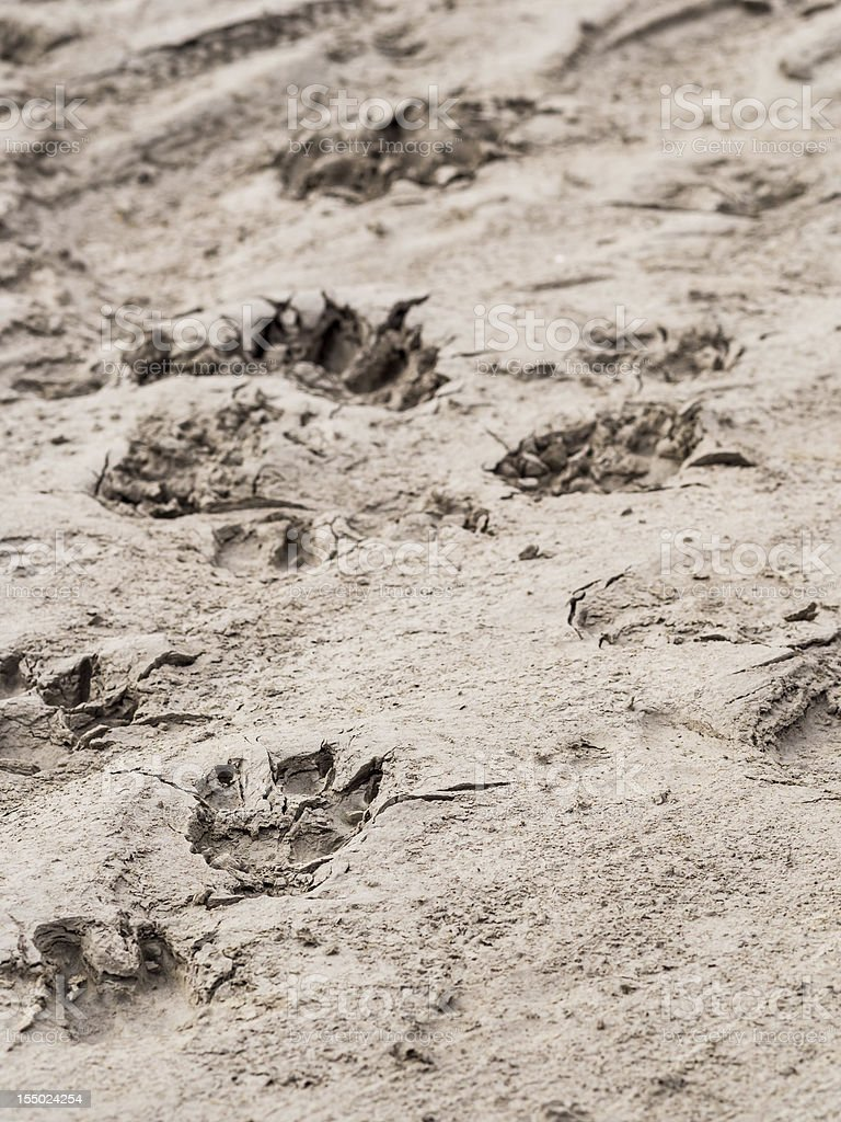 Animal tracks royalty-free stock photo
