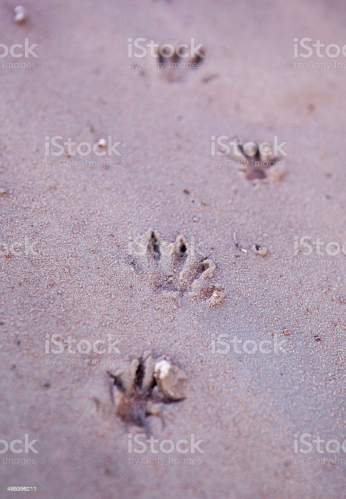Animal tracks stock photo