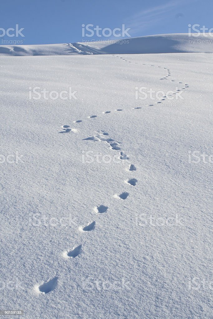 Animal Tracks Snow Winter stock photo