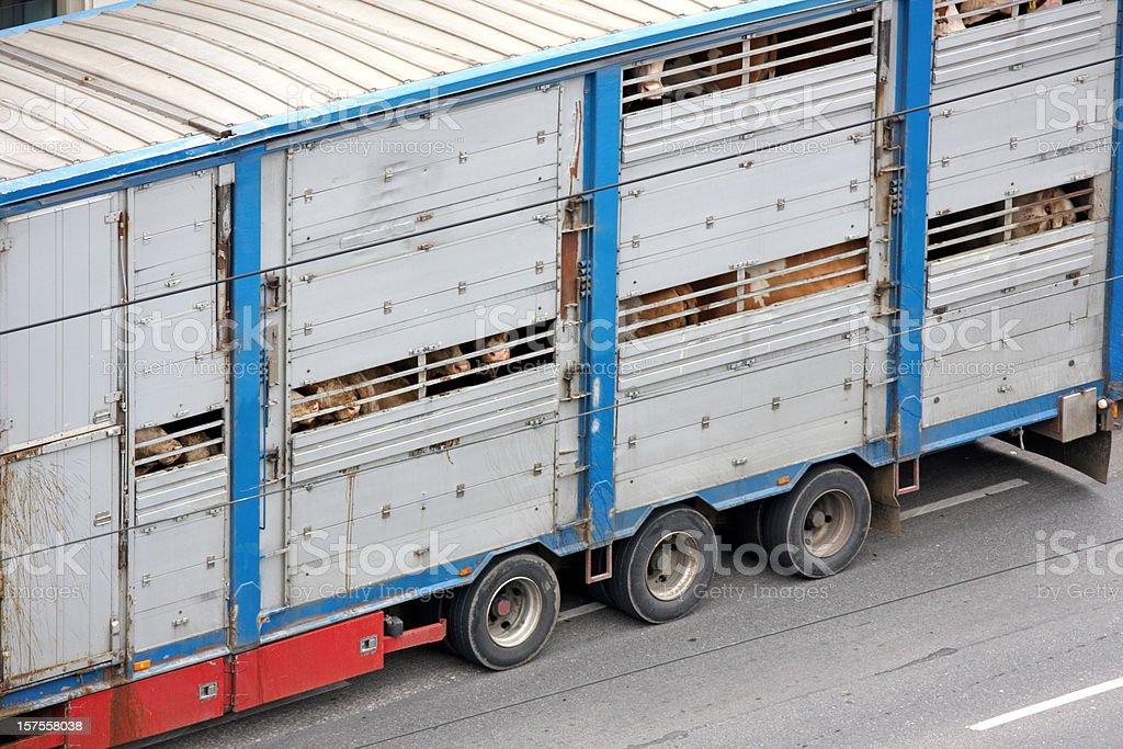 animal transportation royalty-free stock photo