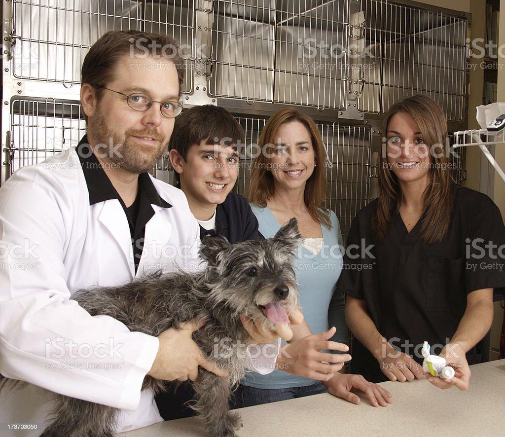 Animal Vet Toothbrushing royalty-free stock photo