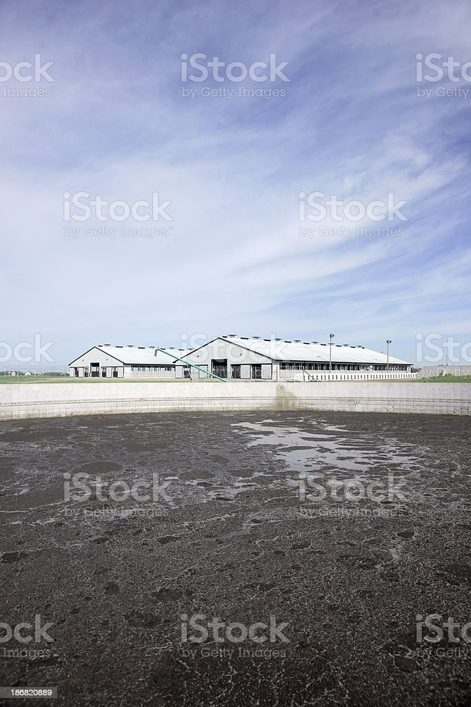 Animal waste management lagoon on a dairy farm stock photo