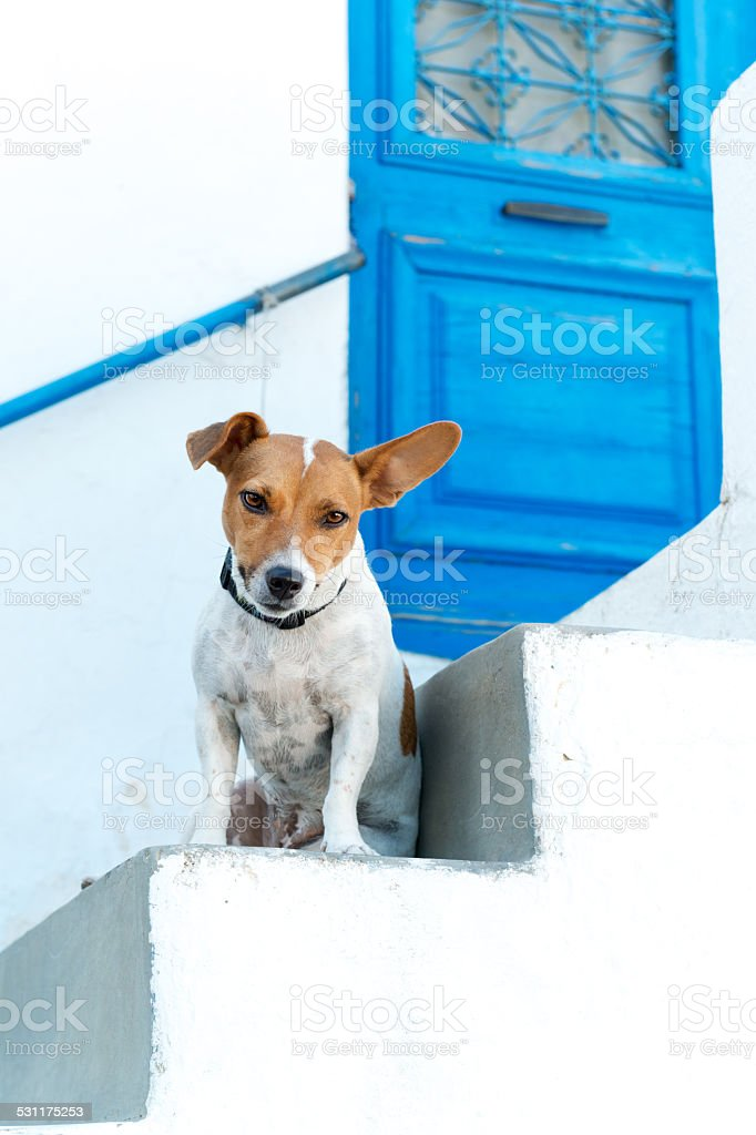 Animal-friendly hotel stock photo