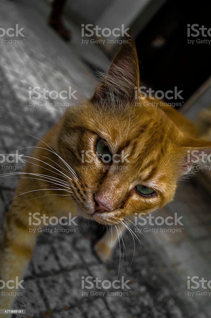 Animali - animals - animales royalty-free stock photo