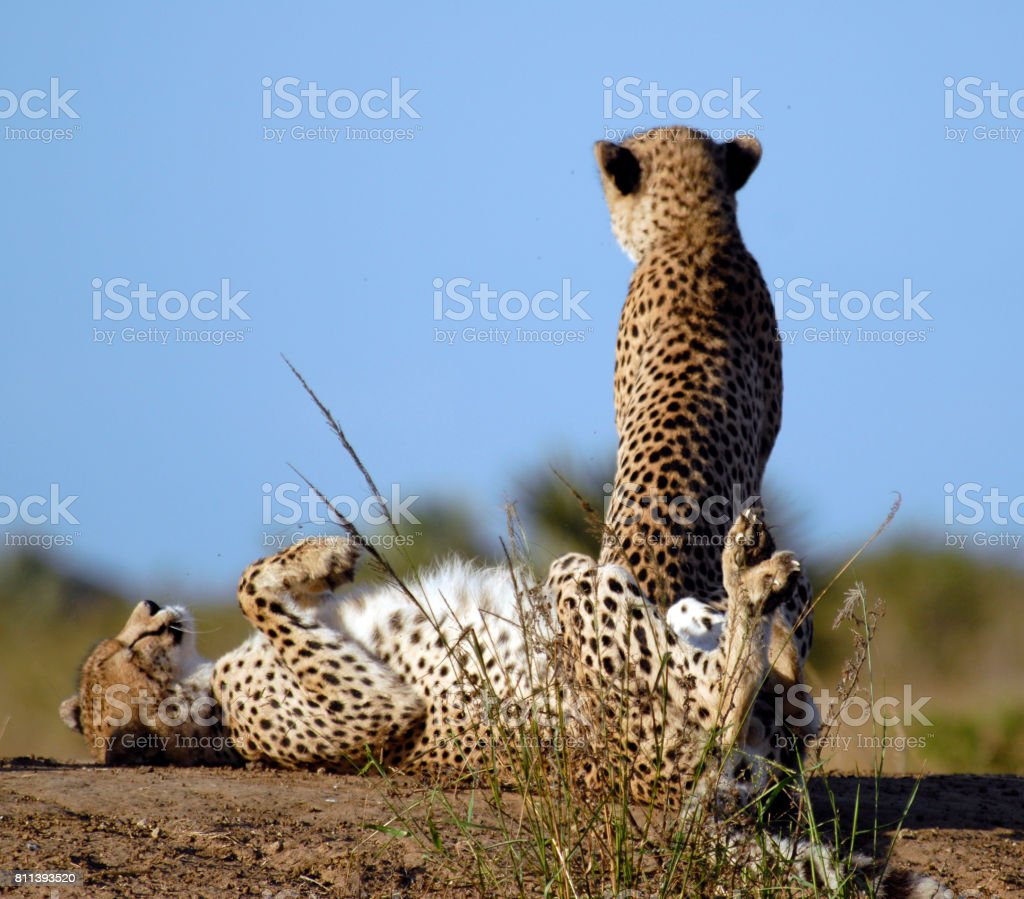 Animals and landscapes, Phinda Private Game Reserve, South Africa stock photo