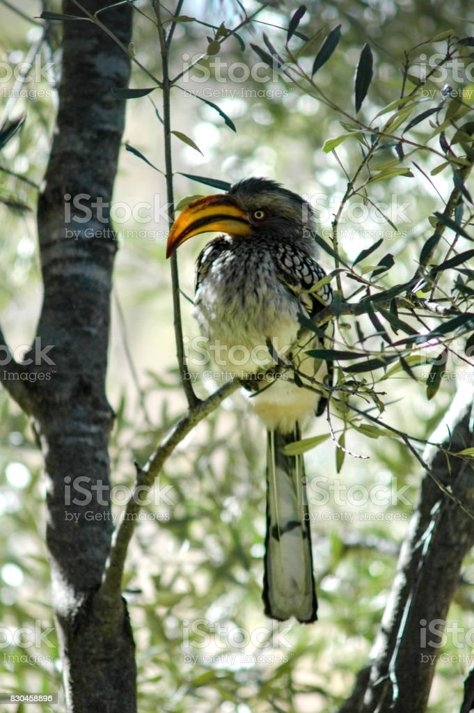Animals and landscapes, Pilanesberg, South Africa stock photo
