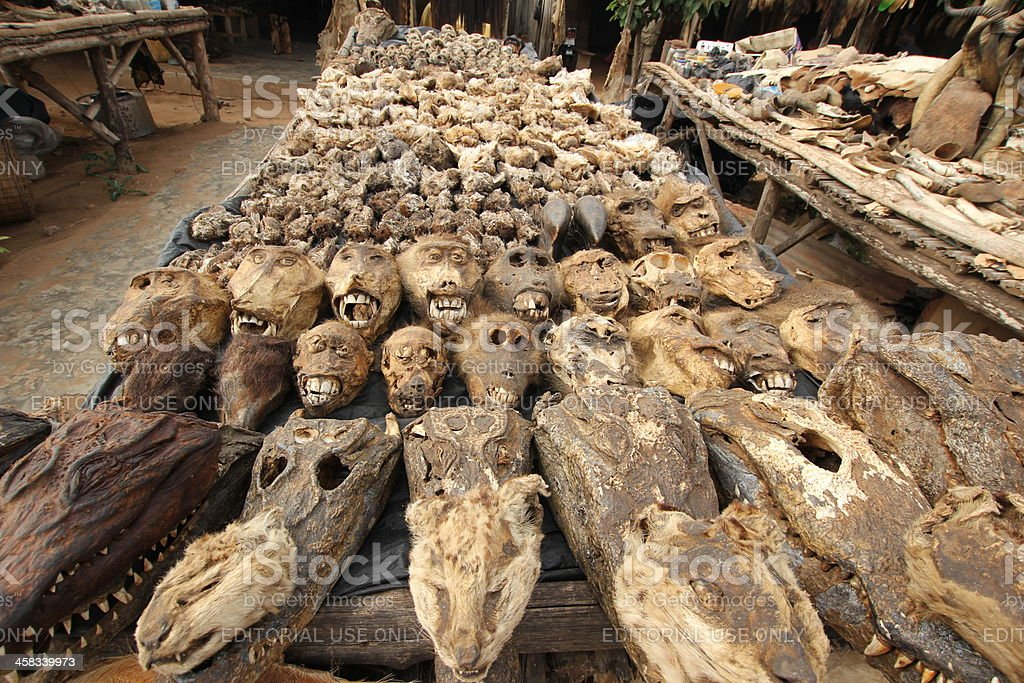 Animals and Skulls at the Voodoo market in Lomé, Togo stock photo