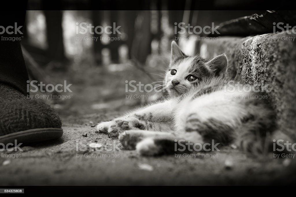 Animals at home. Cute cute little baby cat pet stock photo