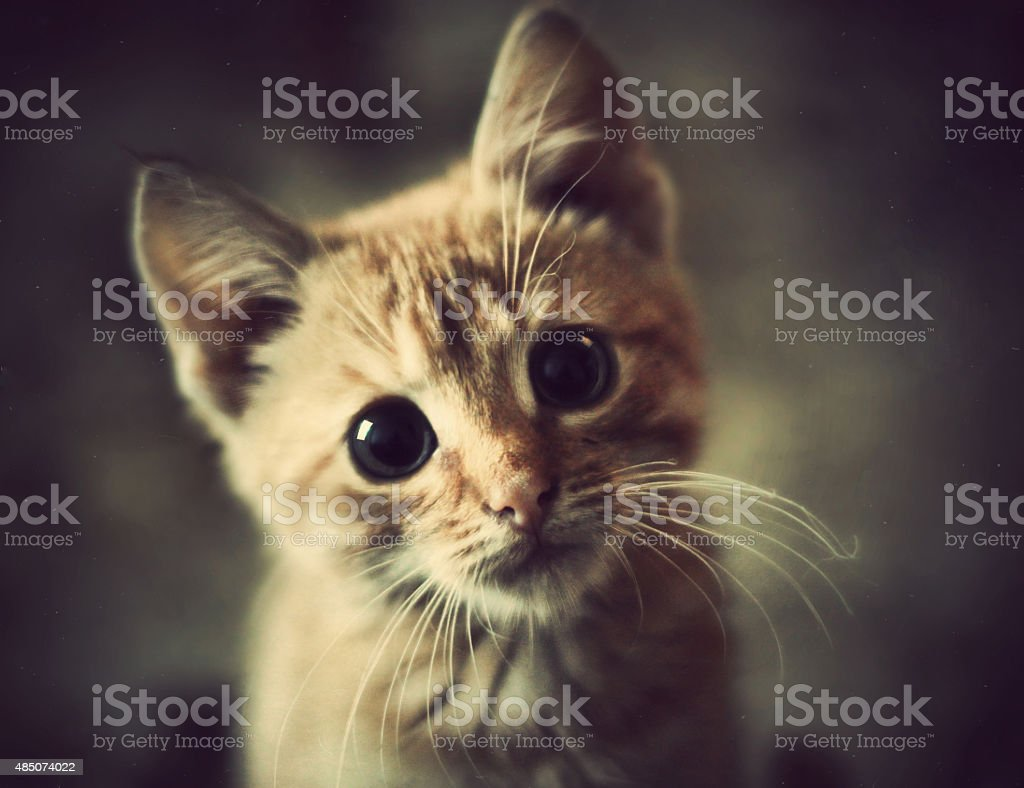Animals at home. Cute Red cute little baby cat pet stock photo