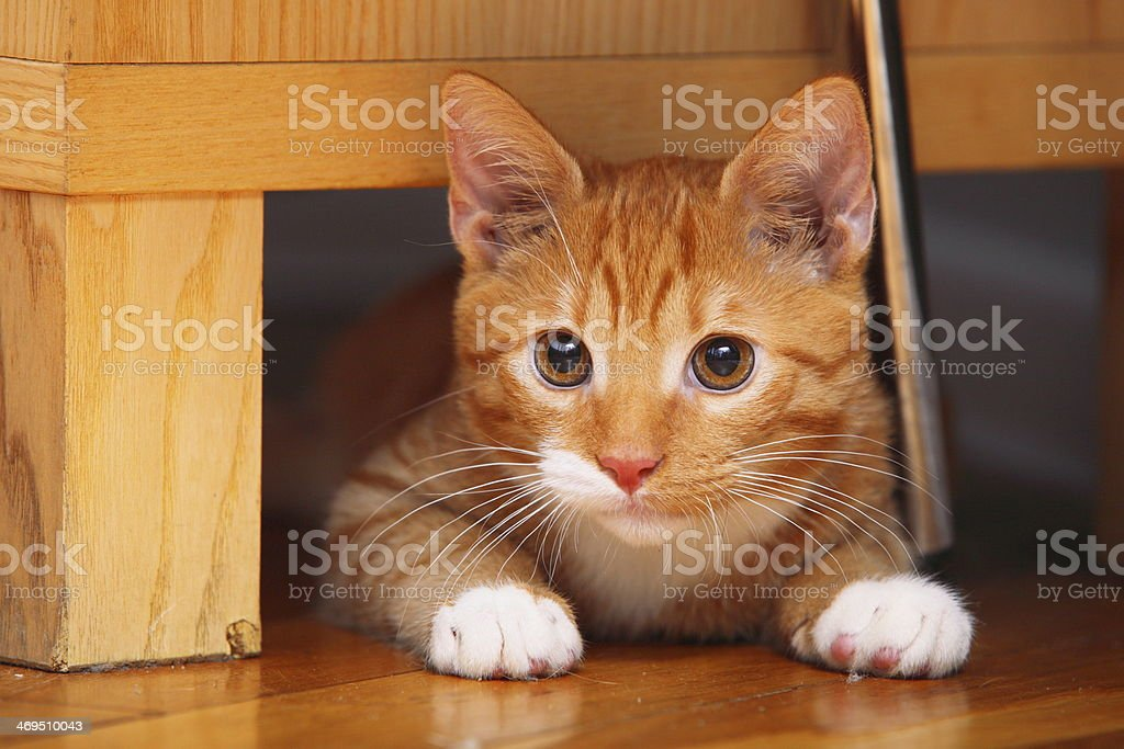 Animals at home - red little cat pet kitty stock photo