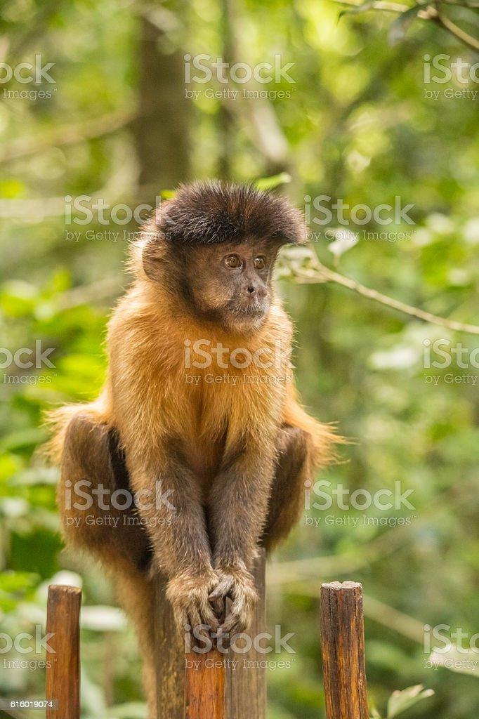Animals at Monkeyland stock photo