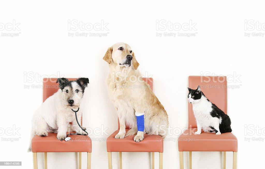 Animals at the Vet stock photo