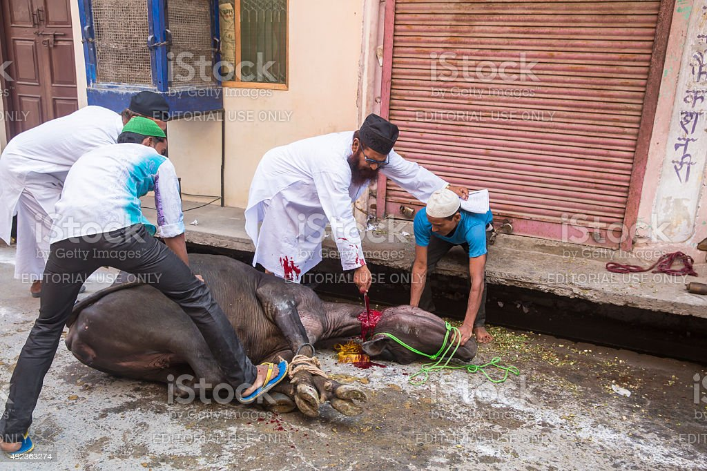 Animals being sacrificed to mark Eid Ul-Adha. stock photo