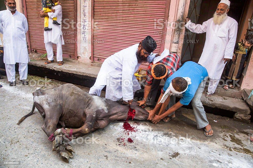 Animals being sacrificed to mark Eid Ul-Adha. stock photo