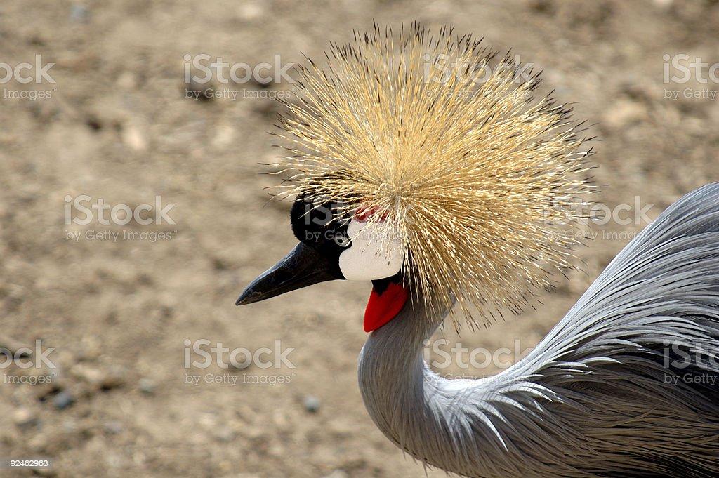 Animals : Birds African Crowned Crane stock photo