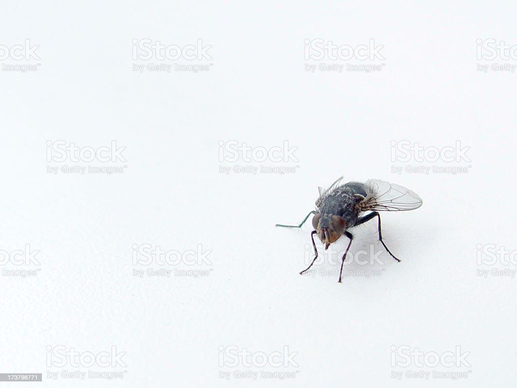 Animals Fly royalty-free stock photo
