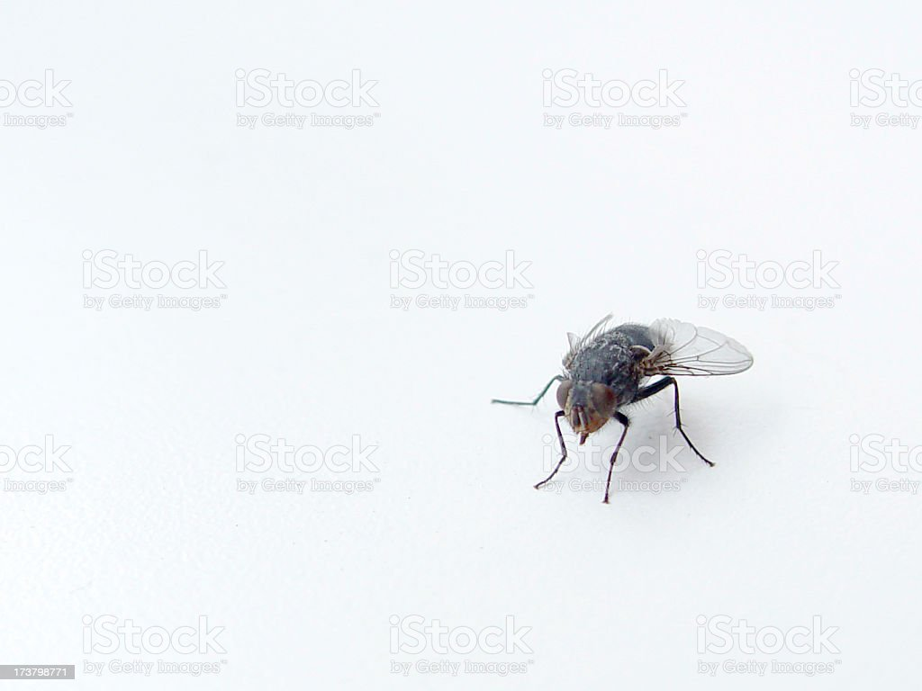 Animals Fly stock photo