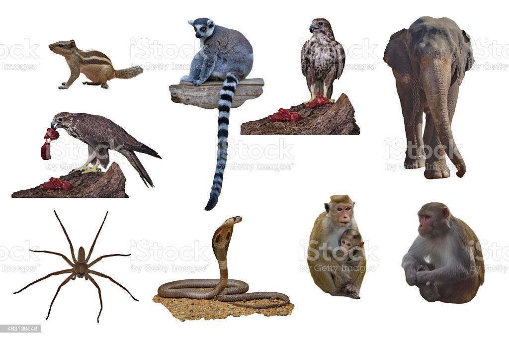 Animals from the zoo on a white background set stock photo