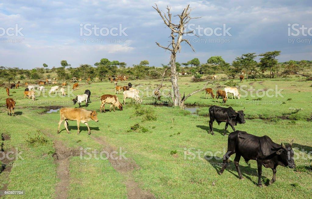 animals in Masai Mara National Park. stock photo