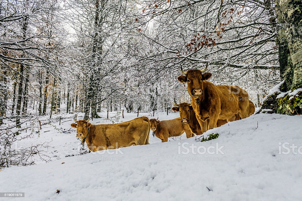 animals in the forest in winter on the way stock photo