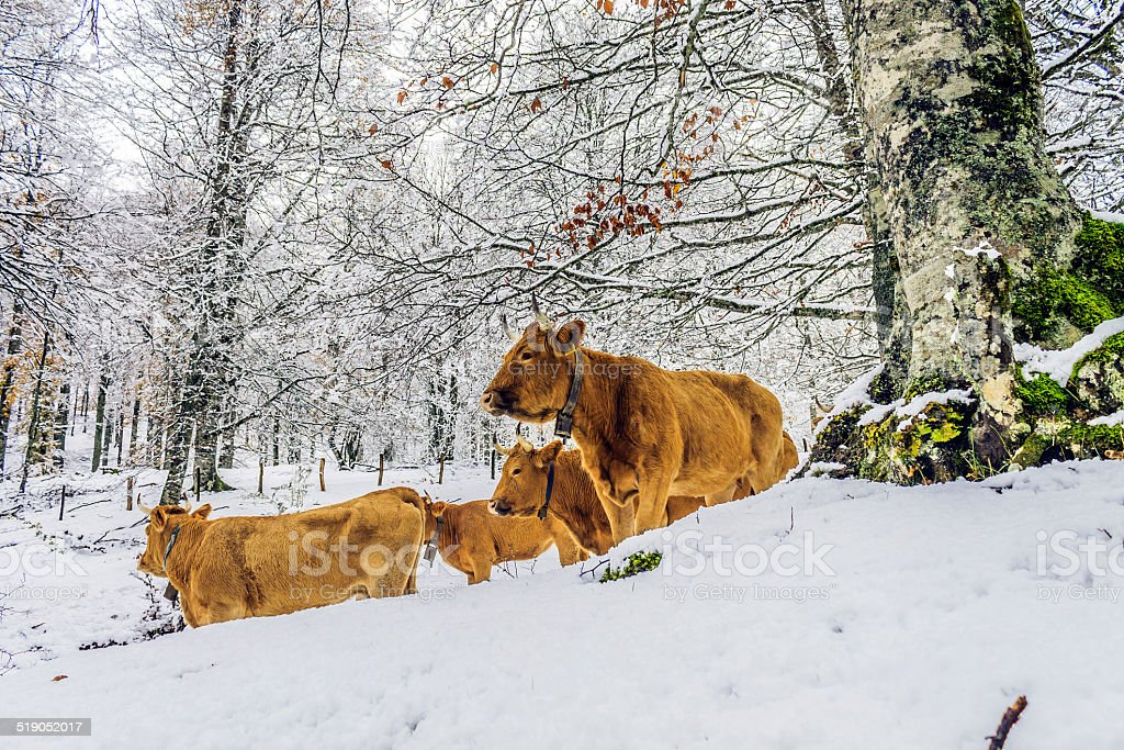 animals in the forest stock photo