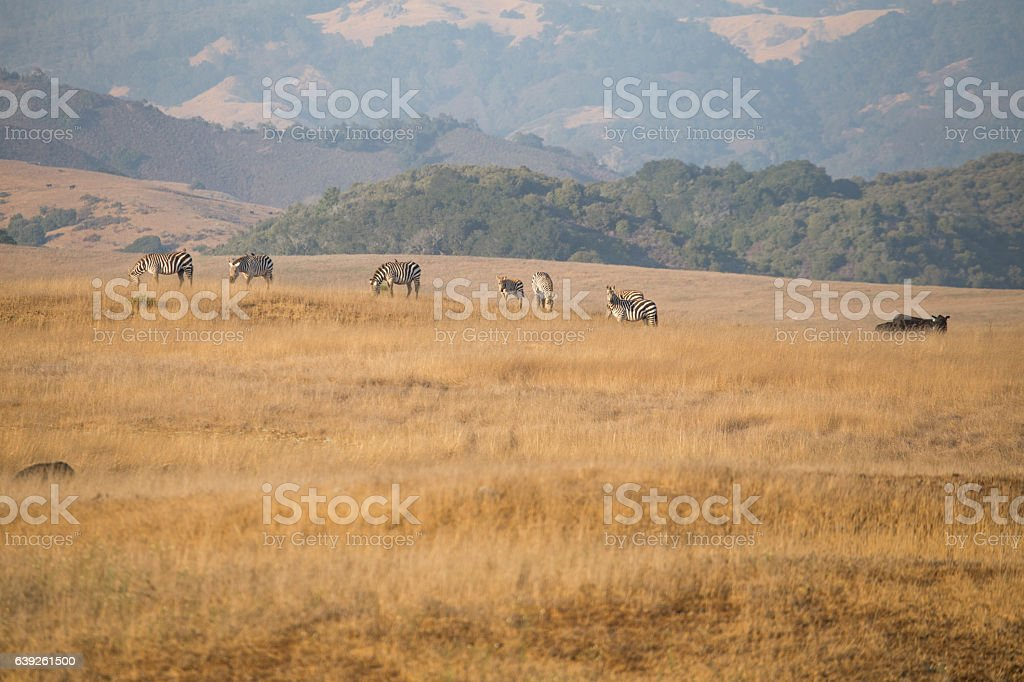 Animals in the wild stock photo