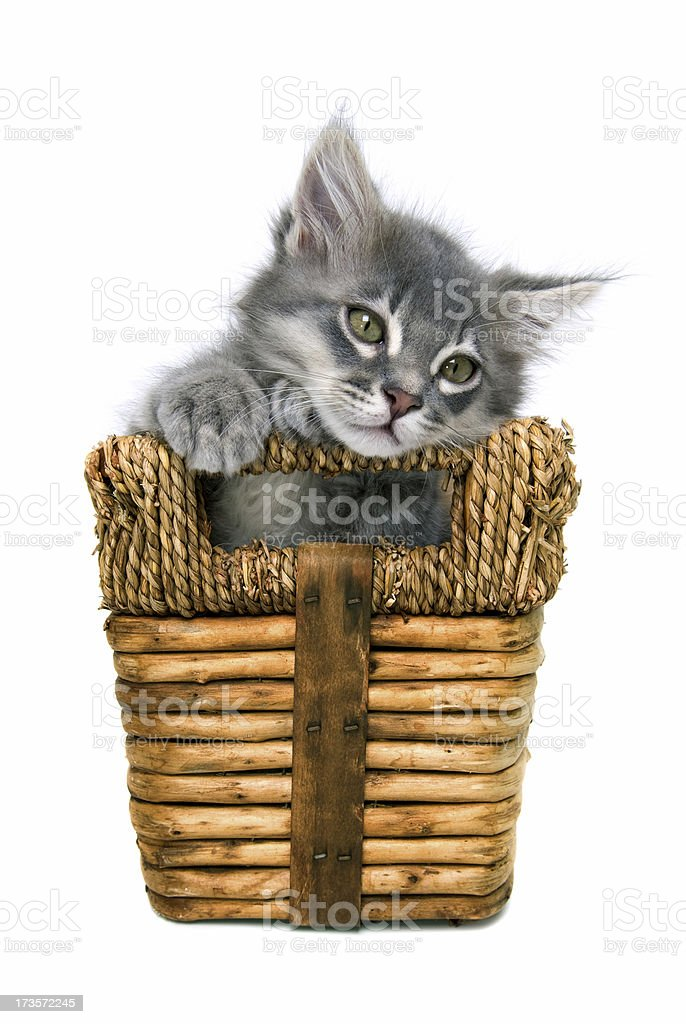 Animals : Isolated Kitten In Basket royalty-free stock photo