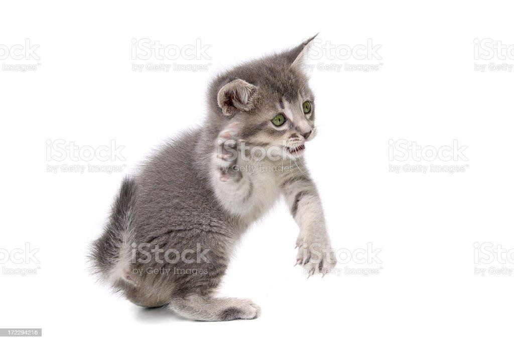 Animals : Isolated Kung Fu Kitty stock photo