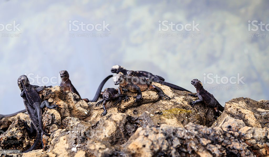 Animals on the Galapagos stock photo