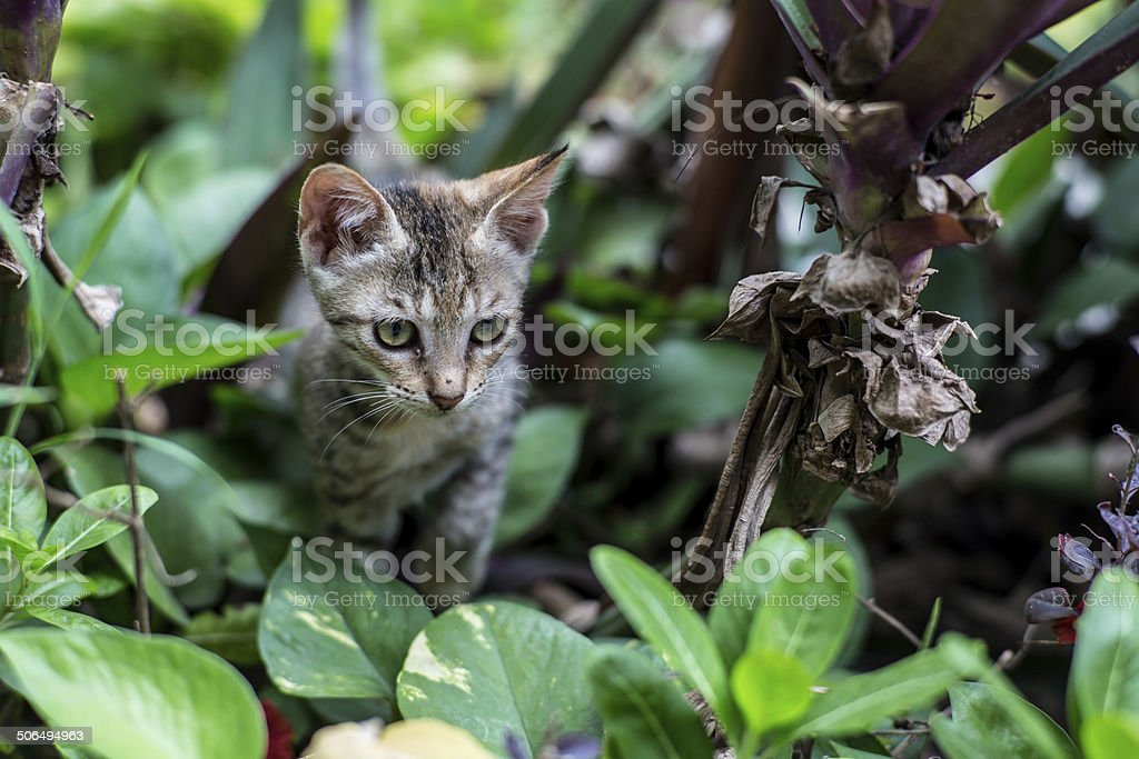 Animals_Mumbai_cat stock photo