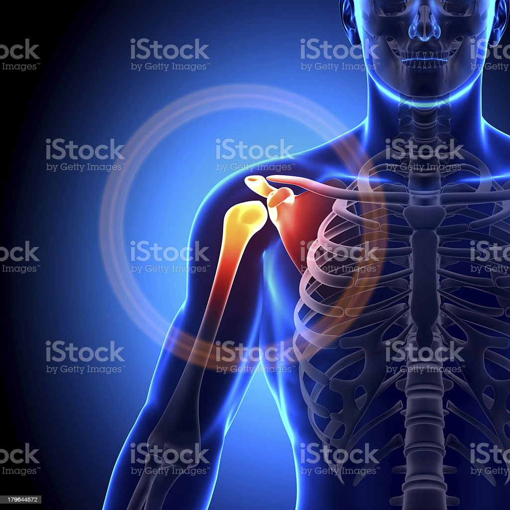 Animated image of a fractured shoulder scapula clavicle royalty-free stock photo
