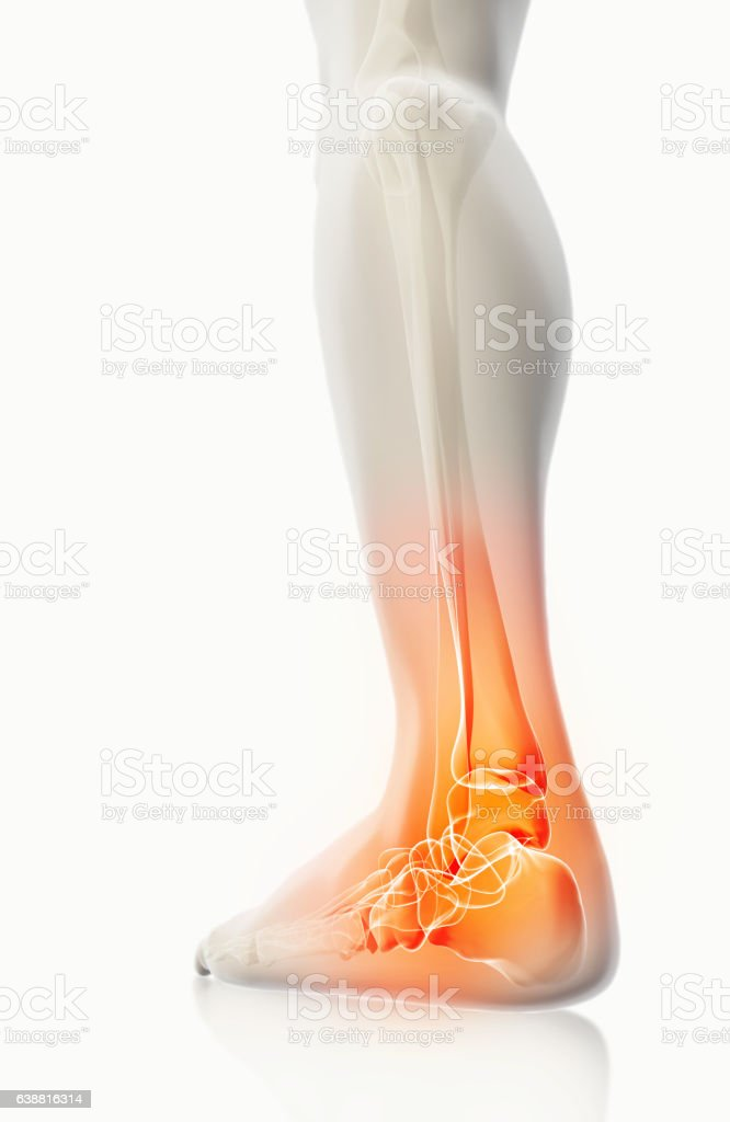 Ankle painful - skeleton x-ray. stock photo