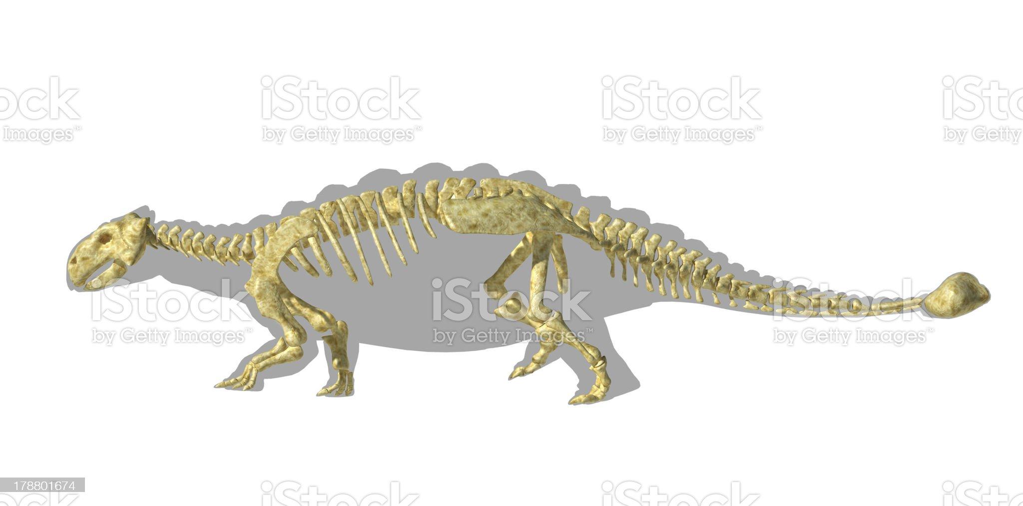 Ankylosaurus dinosaurus silhouette, with full skeleton superimposed. Side view. royalty-free stock photo