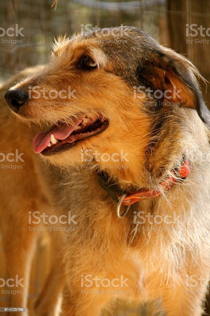Anne the Abandoned Dog stock photo