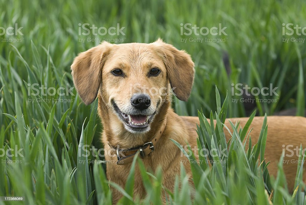 Annie royalty-free stock photo