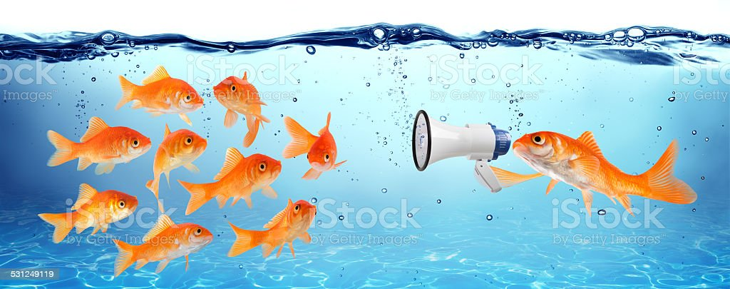 announcement, conference or political campaign stock photo
