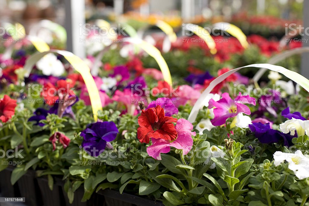 Annual flower sale event stock photo