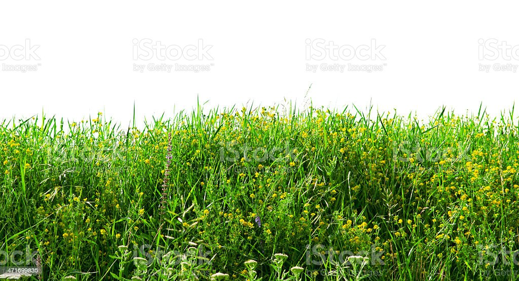 Annual herbs  on white background royalty-free stock photo
