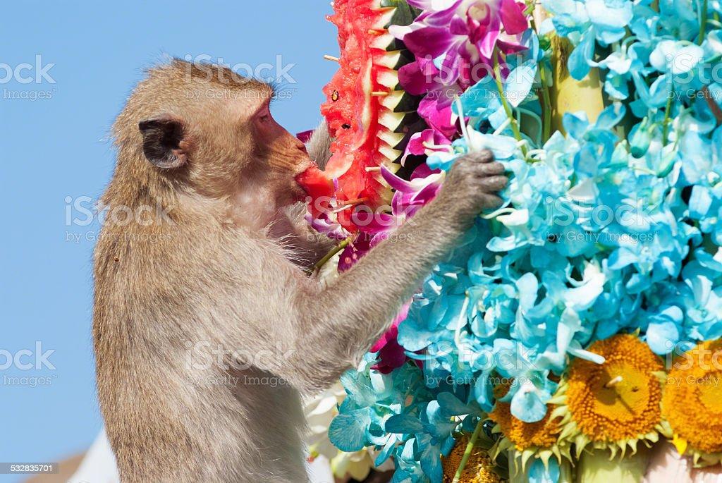 Annual monkey buffet festival stock photo